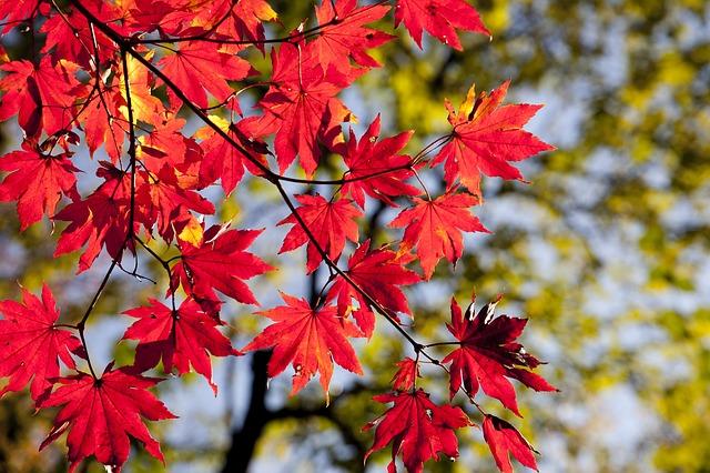 podzimní listí.jpg