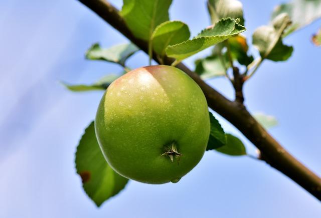 jablko na stromě.jpg
